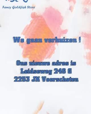 Kan een afbeelding zijn van de tekst 'Fancy Goldfish Store We gaan verhuizen! Ons nieuwe adres is Leidseweg 246 G 2253 JK Voorschoten'